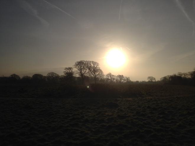 A frosty dog walk in Southampton